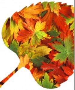 ensemble automne